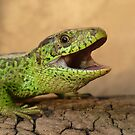 The Laugh of the Little Dino by Istvan Natart