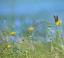 The Butterfly and the Buttercup by Photokes