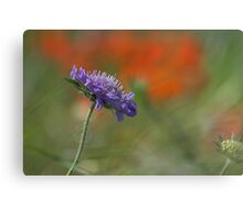 Corn Flower in the Poppy Field Canvas Print