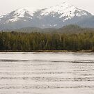 Mountain and Fir Forest from Water by dbvirago