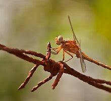 Yellow Dragonfly by César Torres