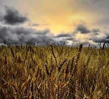 It's Harvest Time by Charles & Patricia   Harkins ~ Picture Oregon