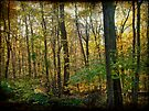 Autumn in the Pennsylvania Woodland - Green Lane by MotherNature