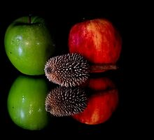 fruits on black background by michelle meenawong