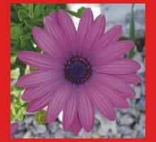 Violet Pink Osteospemum Flower Daisy Kids Clothes