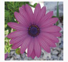 Violet Pink Osteospemum Flower Daisy One Piece - Long Sleeve