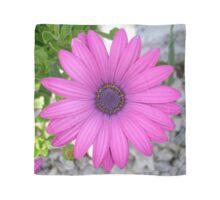Violet Pink Osteospemum Flower Daisy Scarf