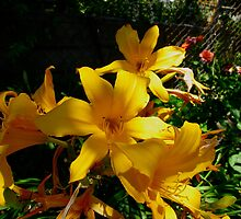 Garden lilies of yellow joy by MarianBendeth