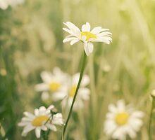 Daisy Wild iphone by KBritt