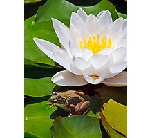White Water Lily with Frog Photographic Print