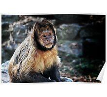 Cute Monkey Poster