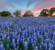 Bluebonnets of the Texas HIll Country 2 by RobGreebonPhoto