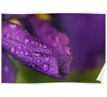 Rain drops and Iris  Poster