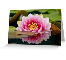 Garden Water Lily Greeting Card