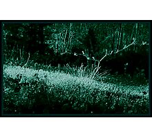 Neon Frond Photographic Print