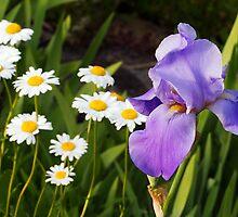 Bearded Iris and Shasta Daisies by Kenneth Keifer
