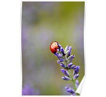 Ladybird 1 Poster