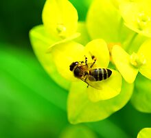 Bee on Yellow Plant by artyamie