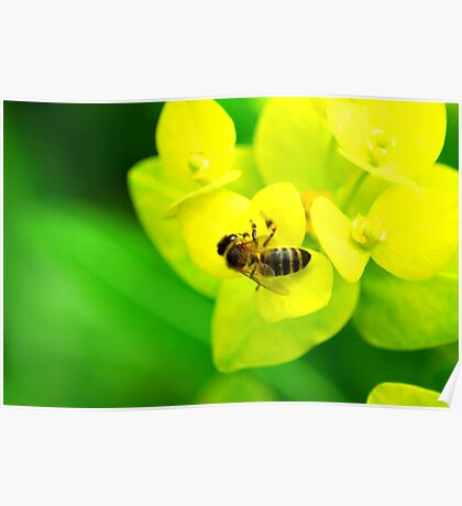 Bee on Yellow Plant Poster