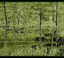 Woven Birch  by Phil Vriend