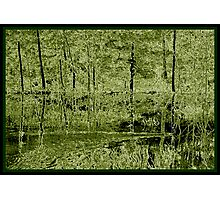 Woven Birch  Photographic Print