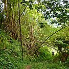 hike through a bamboo forest by globeboater