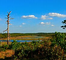 Lake View,  Dune #1. Catfish Creek, Lake Wales Ridge. by chris kusik