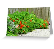 The Beauty Of Nasturtiums Greeting Card