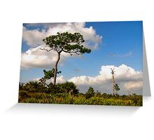 Sand Pine Portrait. Catfish Creek. Lake Wales Ridge. Greeting Card