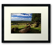 The Hills Of Byron Bay Framed Print