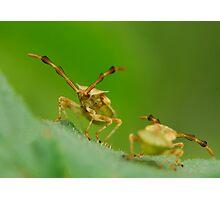 hi,i have an antenna,too Photographic Print