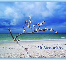 Make a Wish by Carla Barone