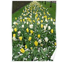 Torrent of Tulips - Keukenhof Gardens Poster