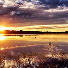 Swan Lake by LadyFi