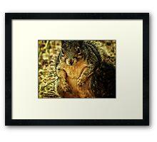 Mr. Squirrel Framed Print