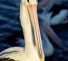 Proud Bird by Josie Eldred