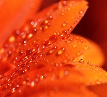Orange Jewels by KUJO-Photo