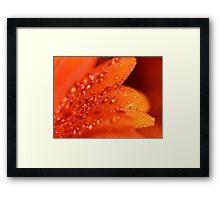Orange Jewels Framed Print