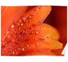 Orange Jewels Poster