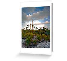 Scrub. Lake Lizzie Preserve.  Greeting Card