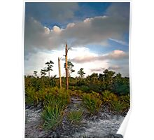 Scrub. Lake Lizzie Preserve.  Poster