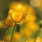 A little Sunshine by KUJO-Photo