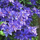 Blooming Purple Flowers by AuntieBarbie