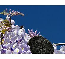 Bumblebee Boogie Photographic Print