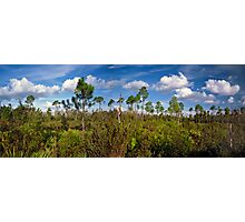 Top of the Dune #1. Lake Marion Creek W.M.A. Photographic Print