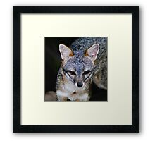 Zorro Grey Framed Print
