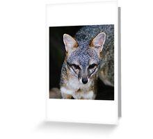 Zorro Grey Greeting Card