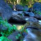 Mountain Stream Paradise by Dianne Phelps