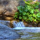 Mountain Stream Paradise 2 by Dianne Phelps