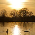 Golden Dinton by Neil  Pickin